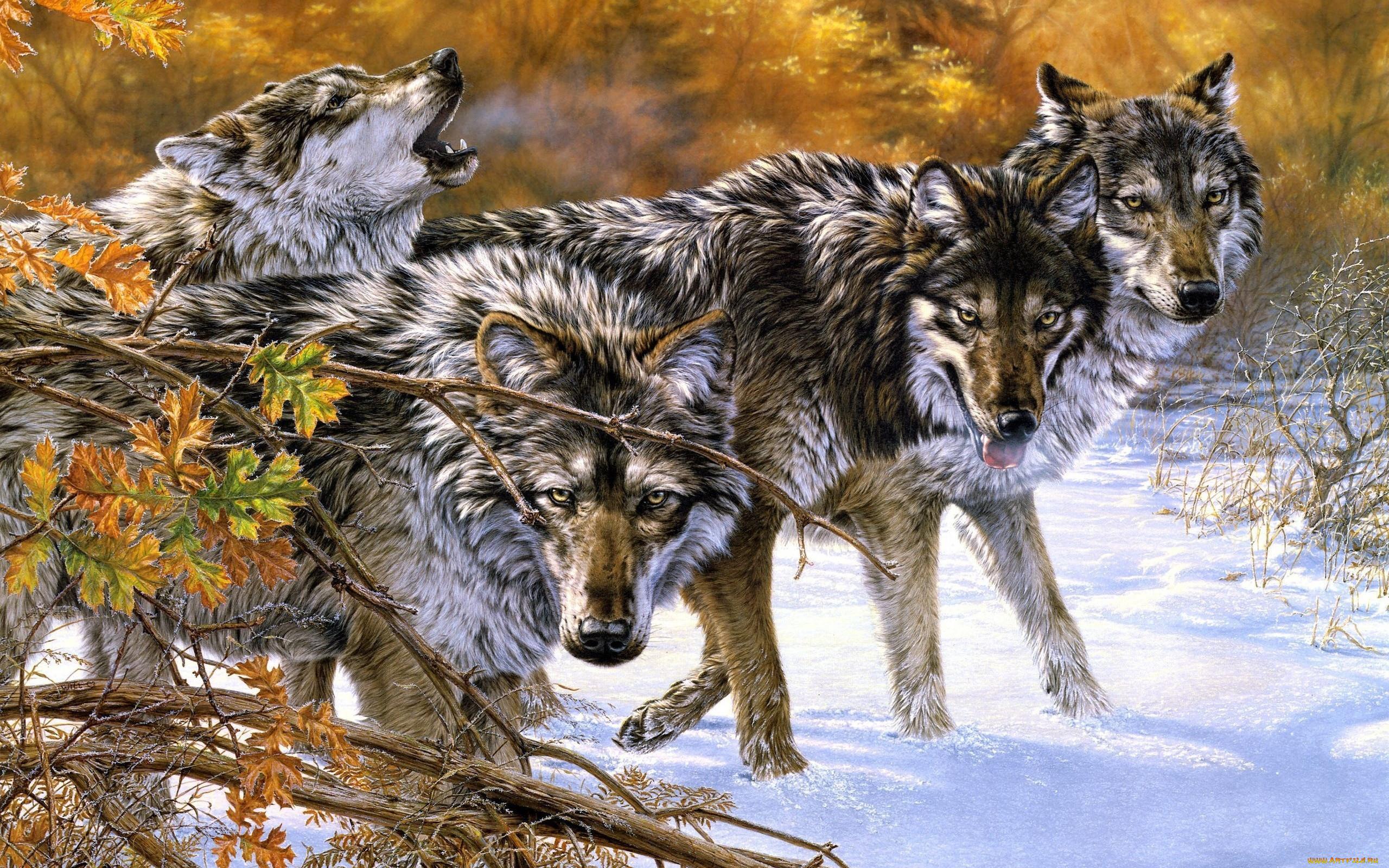 картинки стай волков для рабочего стола сегодняшний день